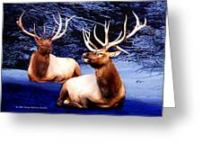 Royal Elk Greeting Card