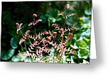 Royal Fern Fronds Greeting Card