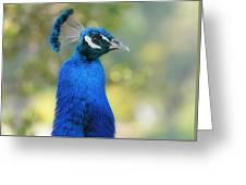 Royal Fowl 6 Greeting Card