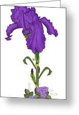 Royal Iris II Greeting Card