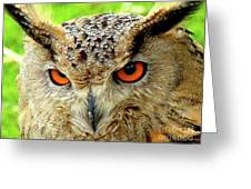 Royal Owl Greeting Card