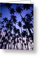 Royal Palm Grove Greeting Card