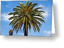 Royal Palm In Florida Greeting Card