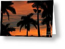 Royal Palms Greeting Card