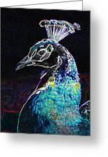 Royal Peacock Greeting Card