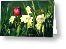 Royal Spring Greeting Card