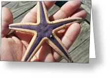 Royal Starfish. . Greeting Card