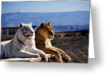 Big Cats Greeting Card