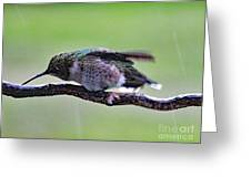 Rubbing Its Bill - Ruby-throated Hummingbird Greeting Card
