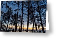 Ruby Beach Through The Trees Greeting Card