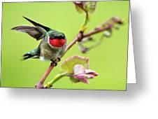Ruby Garden Hummingbird Greeting Card