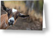 Ruby The Goat Greeting Card