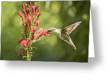 Ruby Throated Hummingbird 2-2015 Greeting Card