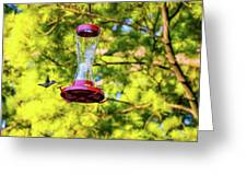 Ruby-throated Hummingbird 3 Greeting Card