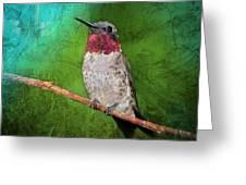 Ruby Throated Hummingbird Greeting Card