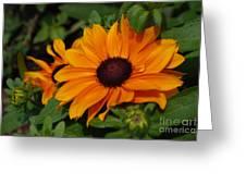 Rudbeckia Flower In Bloom Greeting Card