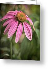 Rudbeckia Morning Greeting Card