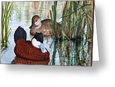 Ruddy Ducks Greeting Card