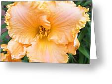 Ruffled Day Lily Greeting Card