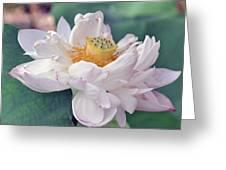 Ruffly Lotus Greeting Card