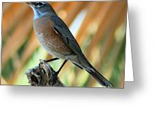 Rufous-backed Robin Greeting Card