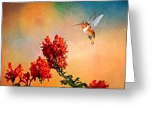Rufous Dream Greeting Card