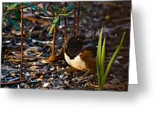 Rufous Sided Towhee At A Glance Greeting Card