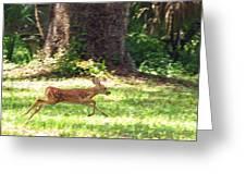 Run Bambi Run Greeting Card