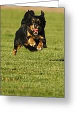 Run Dog Run Greeting Card