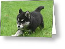 Running Alusky Puppy Dog Stretching Out His Stride Greeting Card