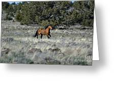 Running Bachelor Stallion Greeting Card