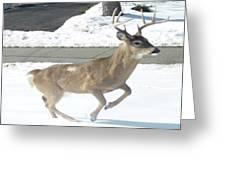 Running Buck Greeting Card by Monica Engeler
