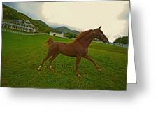 Running Free  Greeting Card