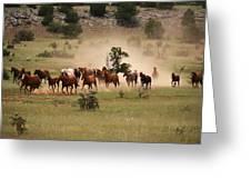 Running Herd Greeting Card