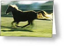 Running Horse Backlit Greeting Card