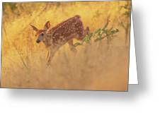 Running In Sunlight Greeting Card by John De Bord