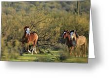 Running In The Desert Greeting Card