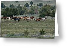 Running Wild Horses  Greeting Card