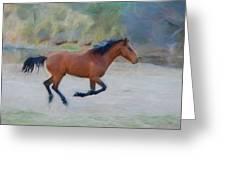 Running Wild Stallion Greeting Card