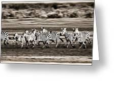 Running Zebras, Serengeti National Greeting Card by Carson Ganci