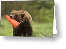 Runway Bear 2012 Greeting Card