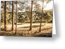 Rural Paddock In Australian Countryside Greeting Card