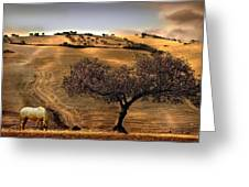 Rural Spain View Greeting Card
