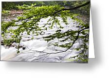 Rushing River Greeting Card by Thomas R Fletcher