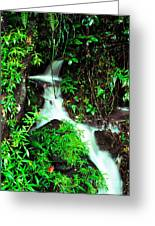 Rushing Stream El Yunque National Forest Mirror Image Greeting Card