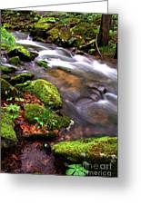 Rushing Stream Monongahela National Forest Greeting Card