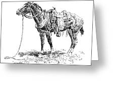 Russell: Rawlins Horse Greeting Card