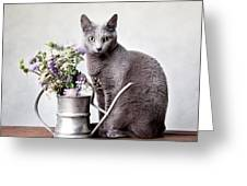 Russian Blue 02 Greeting Card by Nailia Schwarz