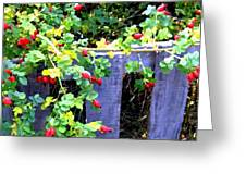 Rustic Fence And Wild Rosehips Greeting Card
