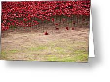 Rustic Poppy Garden Greeting Card